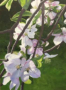 Linda Staiger - Apple Blossom Branch 7 M