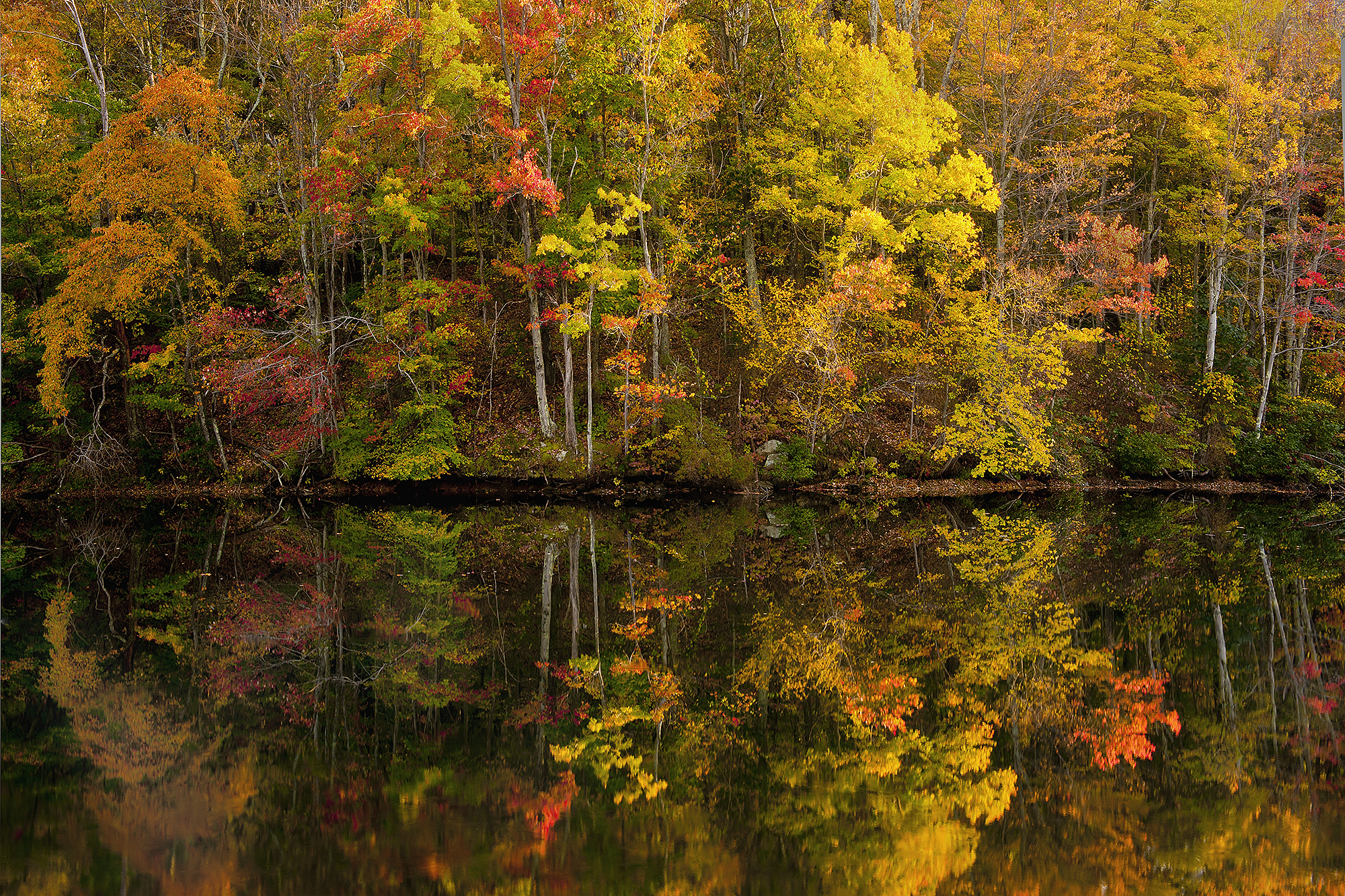 Mint Springs Valley Park Pond in Fall, Crozet, VA_DSC4468 7