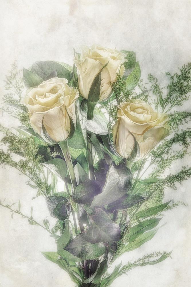 Rose Study #1