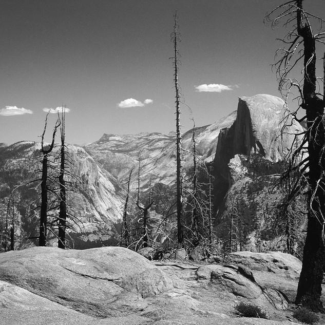 Half Dome behind charred trees, Yosemite 1989
