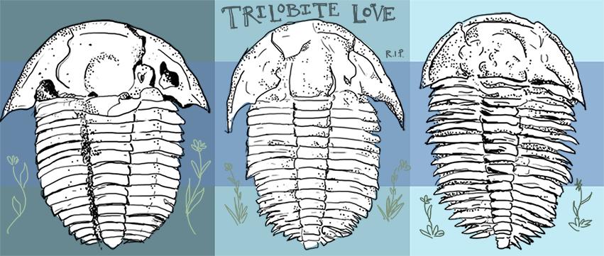 Trilobites love