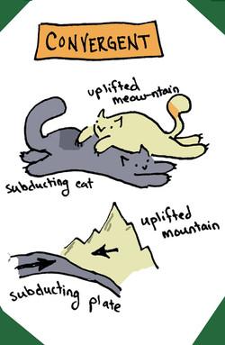 Convergent Cats