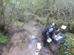 Protocoles de relevés de maco invertébrés en cours d'eau