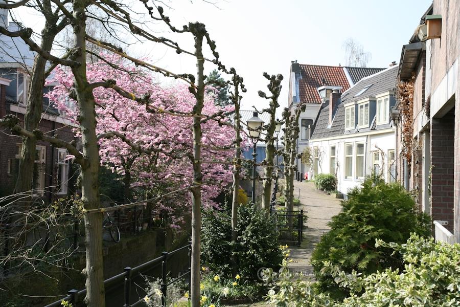 20090403 Zwartewater