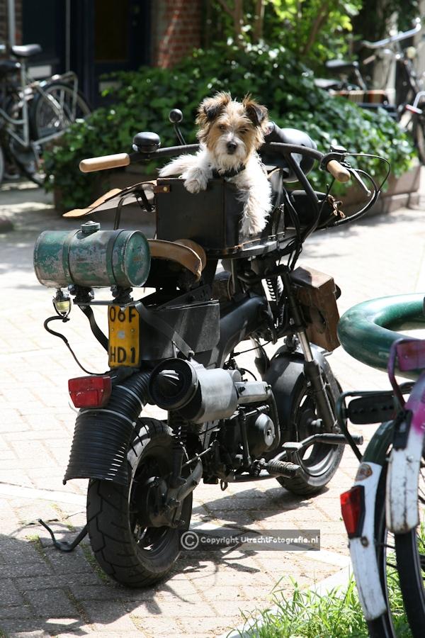 20090510 Hond Lijsterstraat