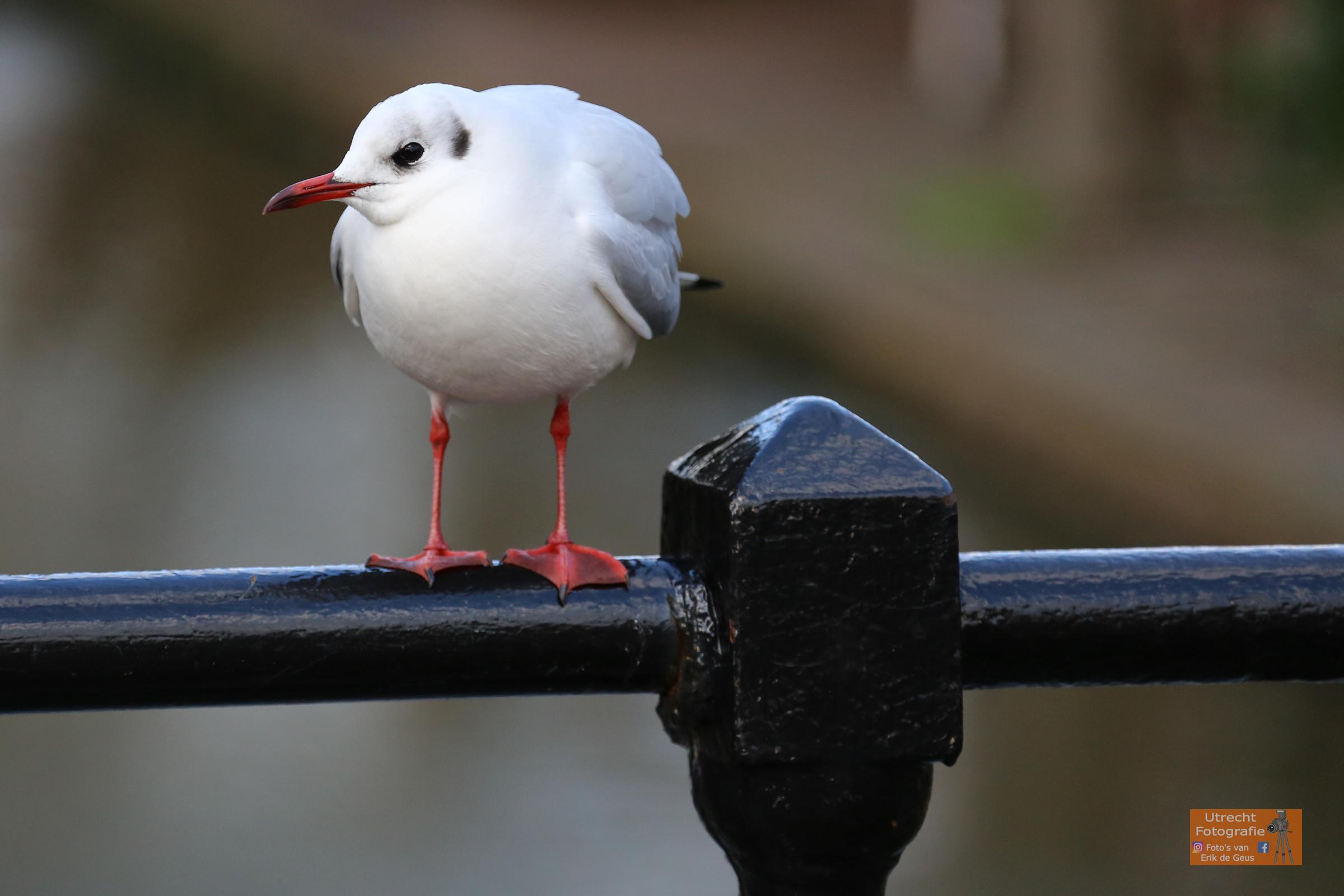 20171227 Oudegracht met vogel 2