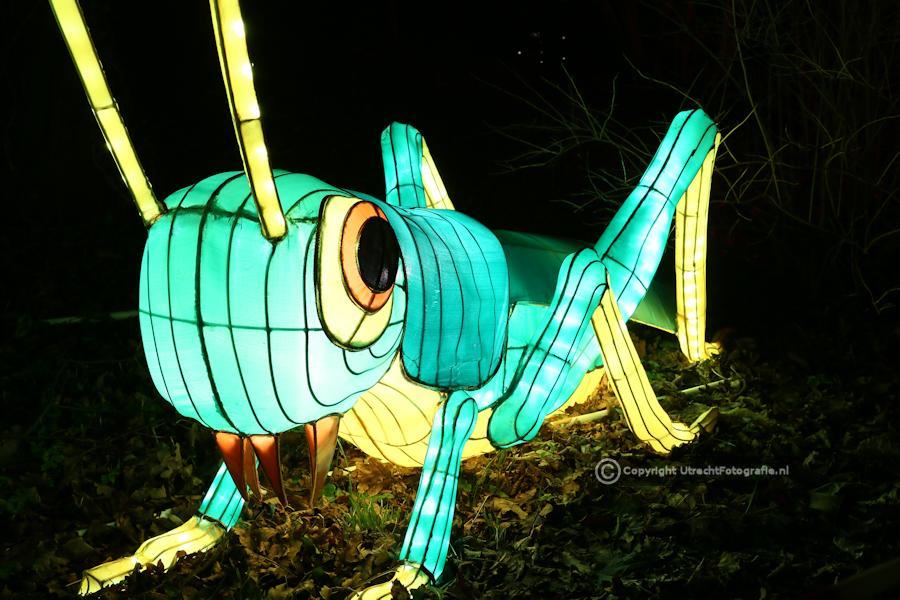 20141230 China Lights 14