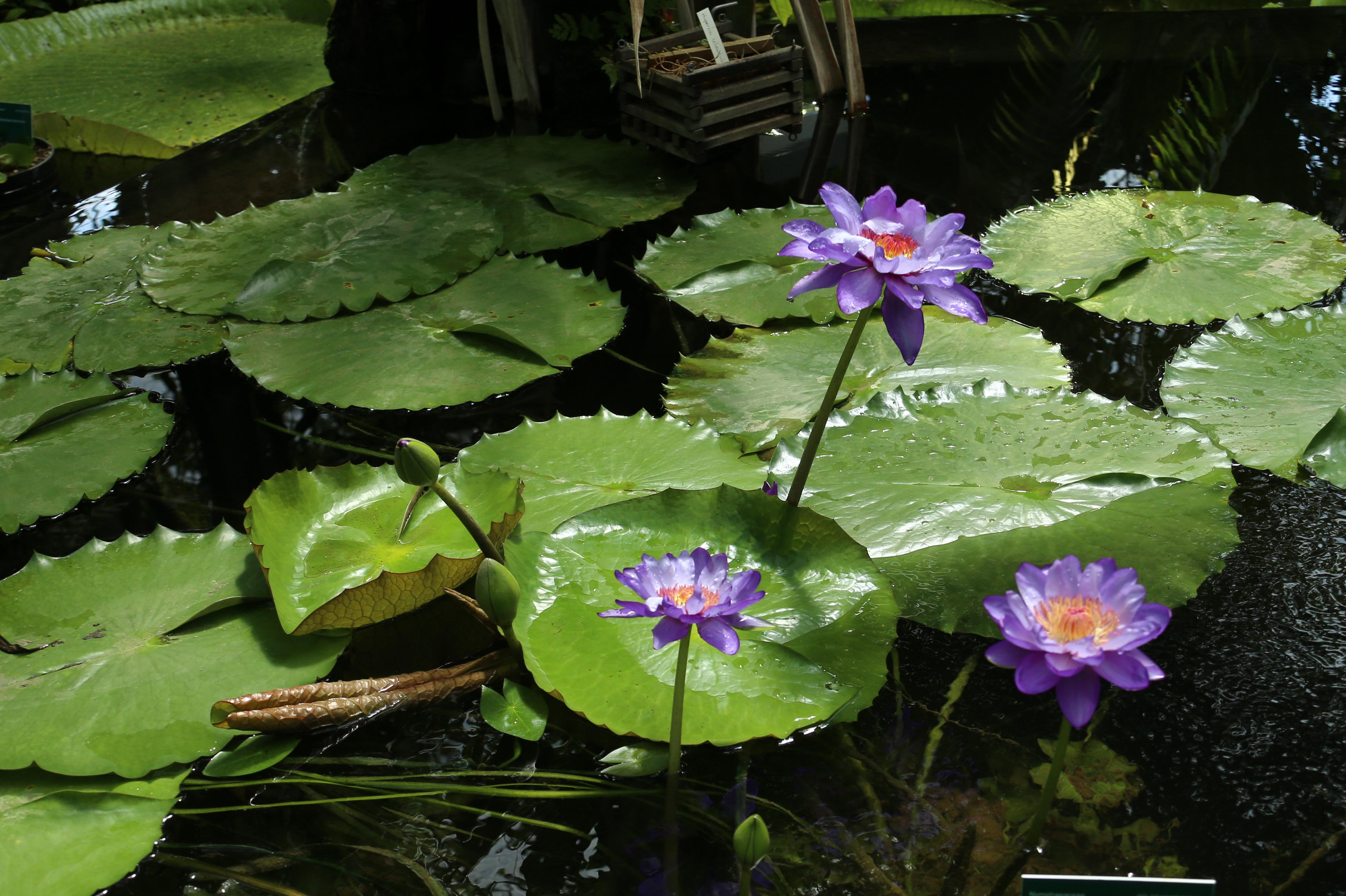 20180713 Botanische tuinen 018