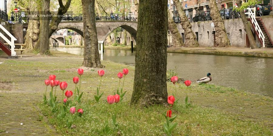 20120422 Oudegracht met Weesbrug