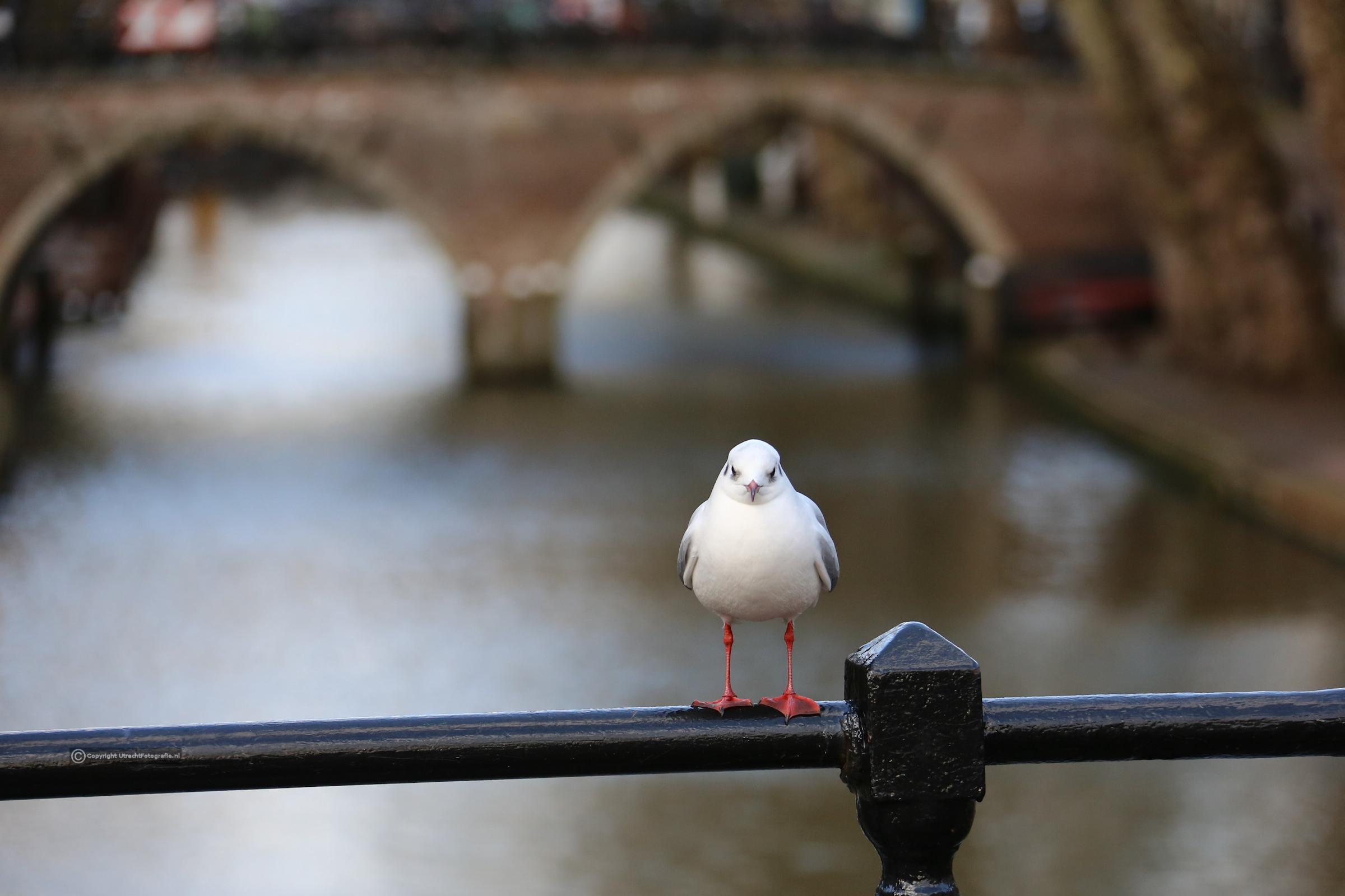 20171227 Oudegracht met vogel 1