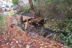 North Creek 020.jpg