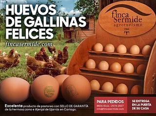 Concepto-Huevos.jpg