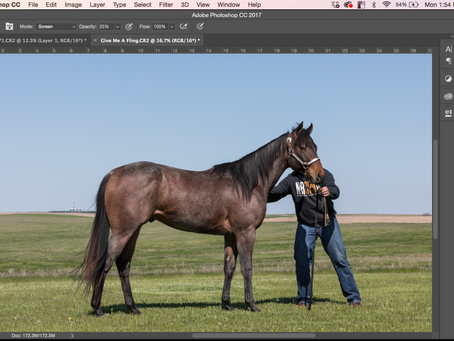 How to take Sale Horse Pictures pt.3