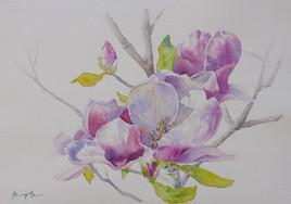 Magnolia I,   watercolour.jpg