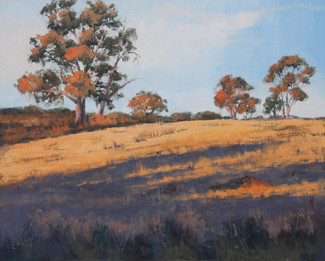Light on the Hill, oil, 50 x 60cm, sold
