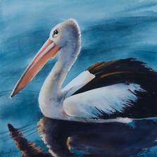 Pelican Study 2, watercolour, 30 x 30cm, sold