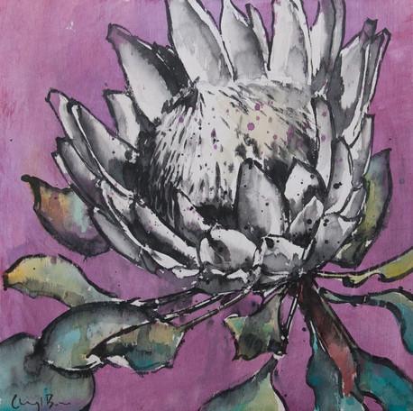 Protea III, ink on ply, 30 x 30cm