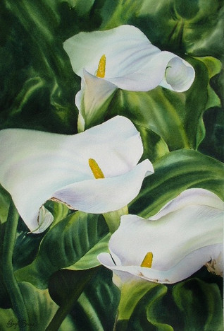 Trio of Arums, watercolour, 61 x 81cm