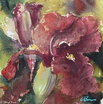 Iris II, watercolour, 30 x30cm