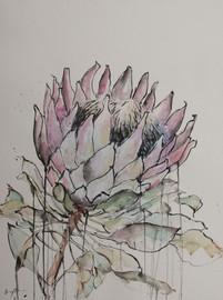 Protea, watercolour, 56 x 76cm