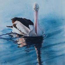Pelican Study 1, watercolour - 30 x 30, sold