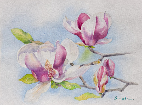 Magnolia II,  28 x 38cm unframed size.jpg