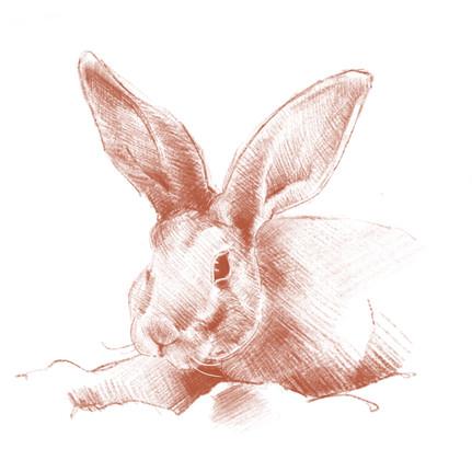 Marper, digital drawing