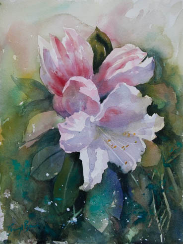 Rhododendron, watercolour 31 x 41cm image only