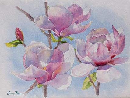 Magnolia III,  28 x 38cm unframed size.jpg