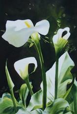Sunlit Arums, watercolour, 61 x 81cm
