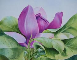Magnolia, watercolour