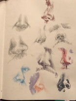 A study of noses