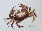 Crab study, painted with coffee & ink