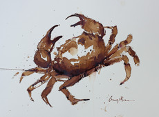 Crab study, painted with coffee & ink, sold