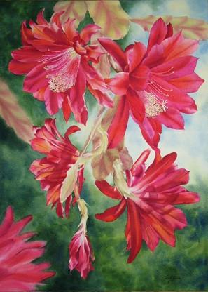 Prickly Beauty, watercolour, 98 x 76cm