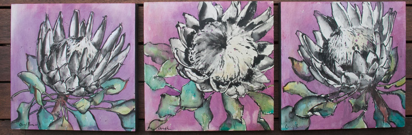 Protea on ply panels as triptych