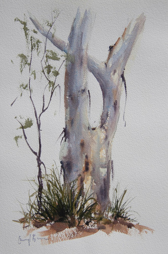 Gum 4, watercolour, A4 double diptych framed in old window