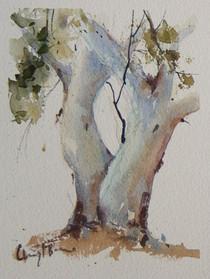 Gum 1, watercolour 10 x 12cm triptych