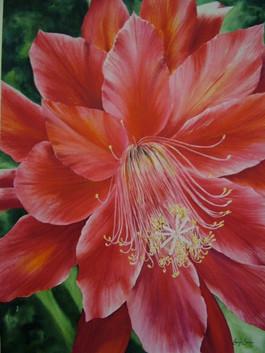 Cactus Flower, watercolour, 61 x 81cm