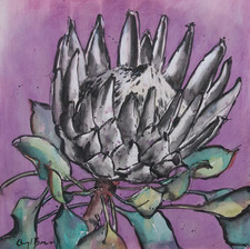 Protea I, ink on ply, 30 x 30cm