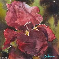 Iris II, watercolour, 30 x 30cm
