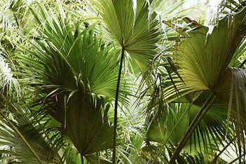 environment-fan-palm-garden-788488.jpg