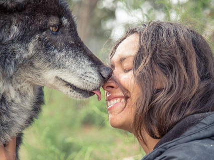 With Jaeger, a high-content wolfdog at Wild Spirit Wolf Sanctuary