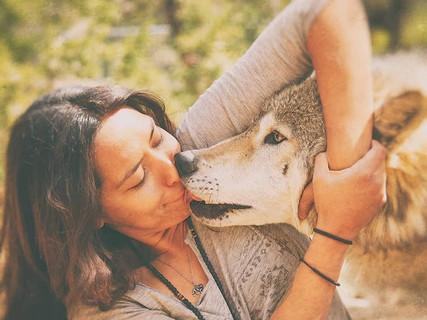 With Cinder, a high-content wolfdog at Wild Spirit Wolf Sanctuary