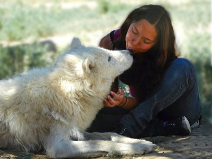 A kiss with Flurry, an Arctic wolf at Wild Spirit Wolf Sanctuary