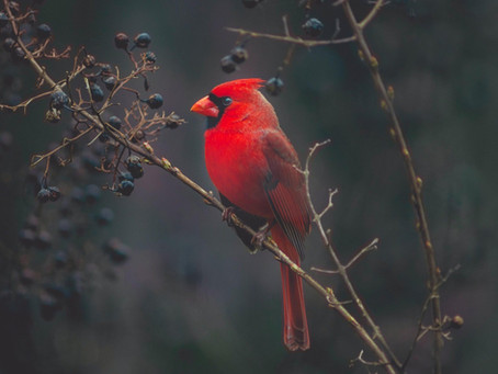 Common Backyard Winter Birds