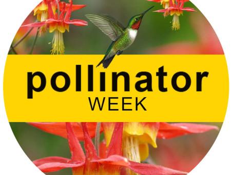 Pollinator Week June 21-27, 2021