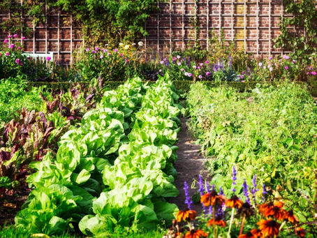 Companion Planting Guide: Sow Easy