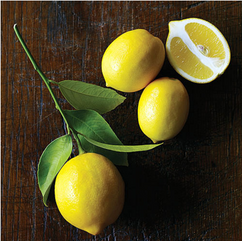 dwarf meyer lemon tree.png