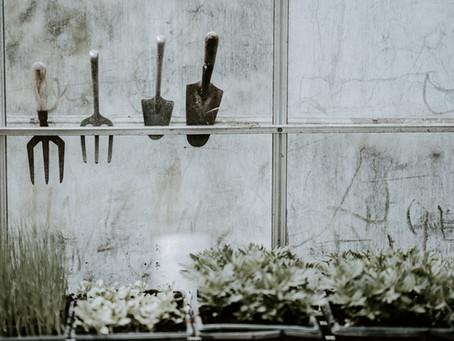 5 Ways to Garden in Winter